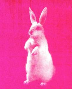 pink bunny copy